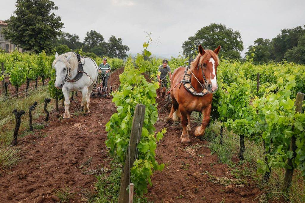 biodynamic wine 2
